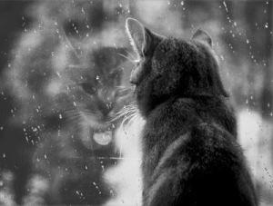 Es tan suspicaz y silenciosa como un felino, observando la lluvia, llena de paz.